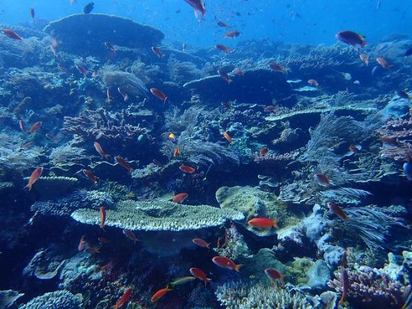 ダイビング コモドの海-1