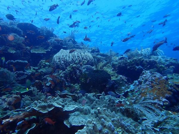 ダイビング コモドの海-2