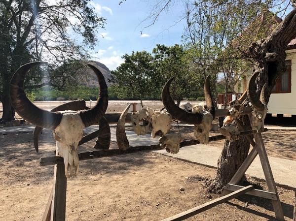 リンチャ島国立公園 飾り物の頭蓋骨