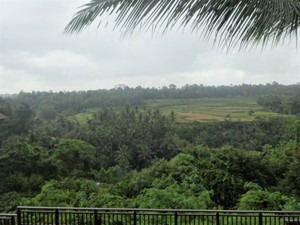 ザ・サマヤ ウブドからの景色