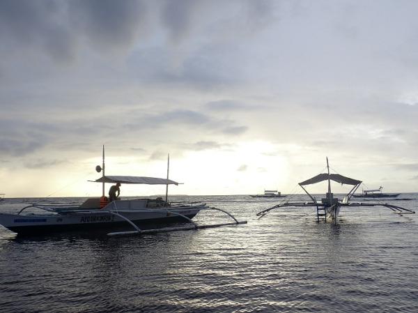 ボホール島 イルカウォッチング バンカーボート
