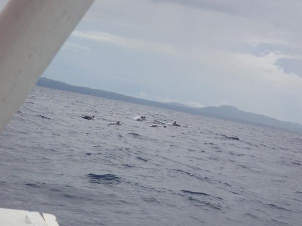 イルカウォッチング イルカの群れ