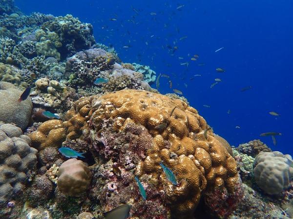 バリカサグ島 シュノーケリング 魚の群れ