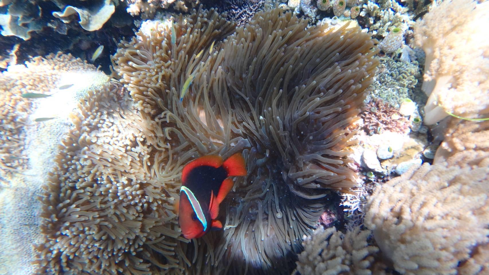 【レポ】セブ島旅行専門店スタッフが本音で語るバリ島とは。の画像