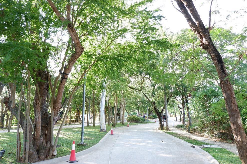 緑の映える道